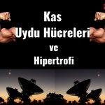 Kas Uydu Hücreleri ve Hipertrofi